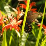 """1180 2016 08-August 01 Butterflies ©Rob Worth Jr"" by Photomarketingusa"