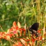 """1191 2016 08-August 01 Butterflies ©Rob Worth Jr"" by Photomarketingusa"