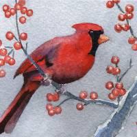 Cardinal Art Prints & Posters by David Rogers