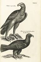 Francis Willughby, THE ORNITHOLOGY. LONDON A.C. FO