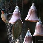 """""""Sunday Light and Webs on Hanging Mobile 002"""" by Wintercreeks"""