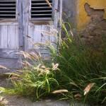 """Curacao,Netherland antilles,Caribbean,colour"" by ErickRamosphotogrphy"