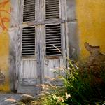 """""""Curacao,caribbean,color,yellow,"""" by ErickRamosphotogrphy"""