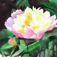 Pinnk Peony Art Prints & Posters by Yvonne Carter