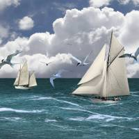 Sails and Seabirds by I.M. Spadecaller
