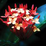 """""""B-001 Red Flower I"""" by cneartgallery"""