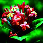 """B-002 Red Flower II"" by cneartgallery"