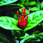 """B-003 Red Flower III"" by cneartgallery"