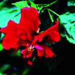 """""""B-004 Red Flower IV"""" by cneartgallery"""