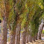 """Rise of Trees 2"" by LyndaLehmann"