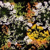 Flower Fireworks Art Prints & Posters by Linda Cavaney