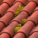 """Clay Roof Tiles"" by janesprints"