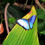 """Academy of Science Butterfly Pictures 2011 039"" by Wintercreeks"