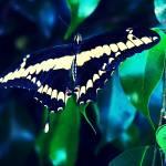 """Aviary Photo_131140348123264518"" by LouisGyllen"