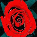 """""""Rose"""" by Lucamo"""