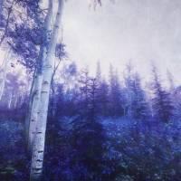 Wander trough the foggy forest Art Prints & Posters by Priska Wettstein