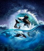 Orca Wave