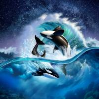 JL_Orca Wave_FAA Art Prints & Posters by Jerry LoFaro