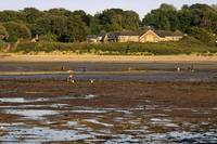 Bait Digging At Bembridge