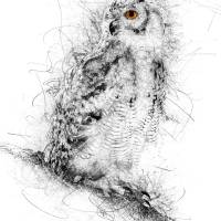 Owl Sketch Art Prints & Posters by Ann Garrett