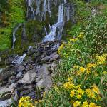 """Vidae Falls & wildflowers, Crater Lake Natl Park"" by JohnChaoPhoto"