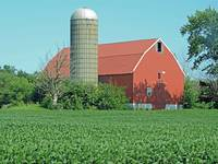 Red Barn with Soybean Crop - 4046