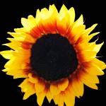 """SunflowerNine"" by NikkiLeck"