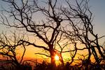 """Tree Branches Dancing In The Sunlight by James """"BO"""" Insogna"""