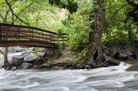 Flowing River With Bridge and Hollow Tree