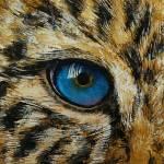 """Leopard Eye"" by creese"