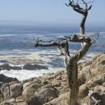 """Lone tree looking out to the Pacific Ocean"" by SueLeonard"