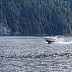 """2016 Indian Arm Cruise 39"" by PriscillaTurner"