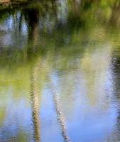 Spring Reflection Abstract