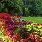 """Stanley Park Vancouver Sept 2011 4"" by PriscillaTurner"