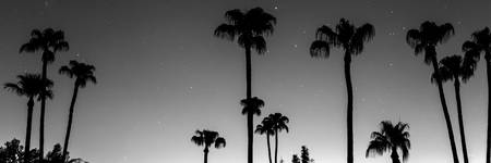Tropical Starry Night Panorama in Black and White