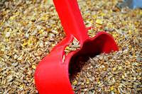 Farm Animal Grain Feed_5041