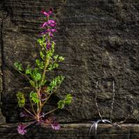 """Wall Flower"" by JohnSloop"
