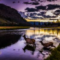Twilight Crossing Art Prints & Posters by Lorraine Sommer