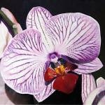 """Purple Orchid"" by matteopaints"