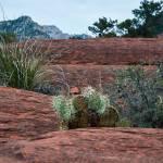 """Sedona Cactus"" by Kirtdtisdale"