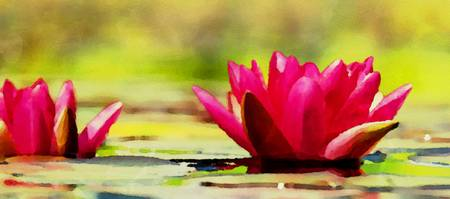 Water Lily - ID 16235-220314-4186