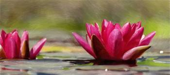 Water Lily - ID 16235-220341-1128
