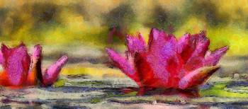 Water Lily - ID 16235-220419-3506