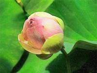 Water Lily - ID 16235-220509-0527