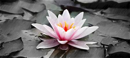 Water Lily - ID 16217-202737-0125