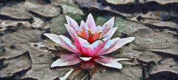 Water Lily - ID 16217-202742-2458