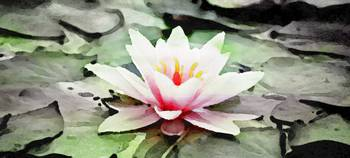 Water Lily - ID 16217-202747-1223