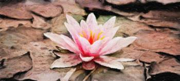 Water Lily - ID 16217-202804-1481