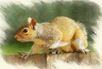 Squirrel - ID 16218-130644-6860