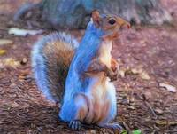 Squirrel - ID 16218-130645-3746
